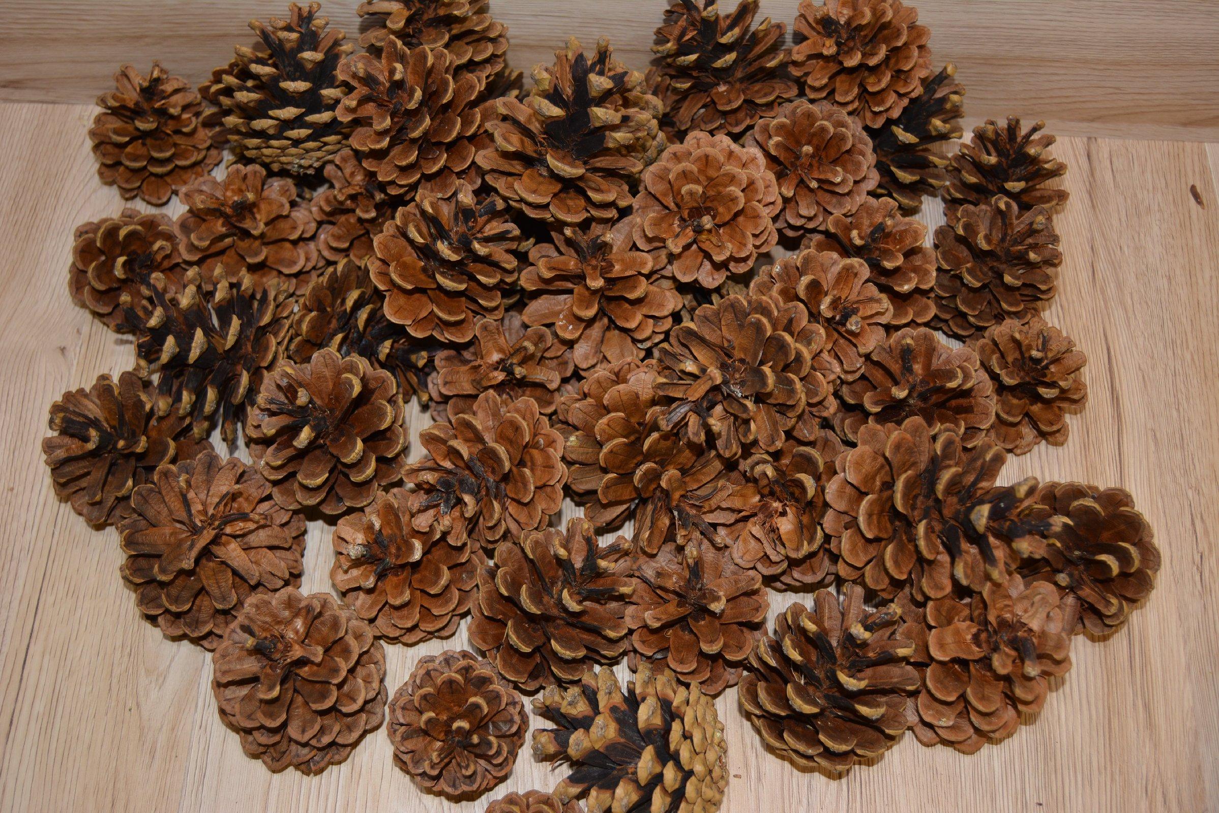 Tannenzapfen Kiefernzapfen Natur Grosse Zapfen 5 10cm Fur Weihnachten Deko Usw Ebay